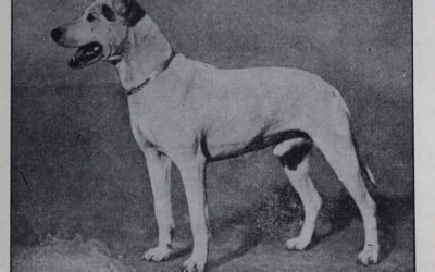 Hundezucht und Hundehandel