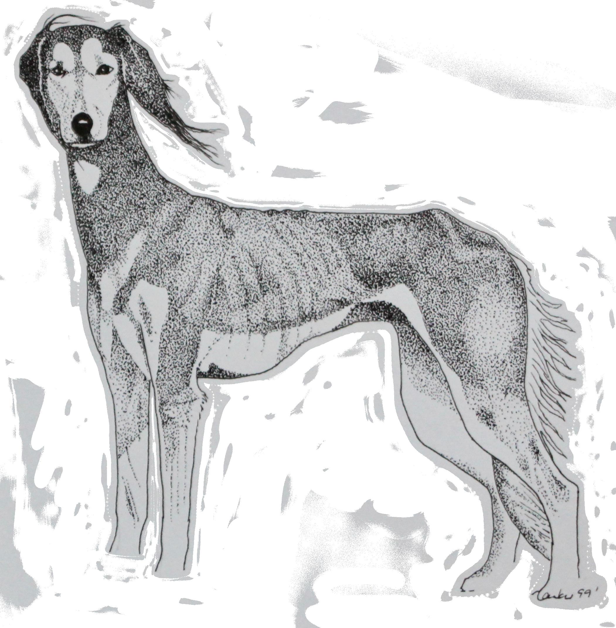 Illustration Sheltie