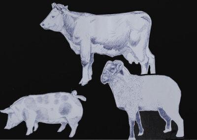 Rind, Schaf, Schwein