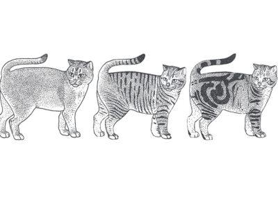 Katze Tabby