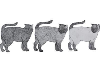 Siam-Katze