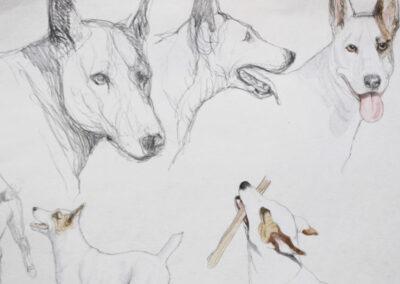 Skizzen von Hunden