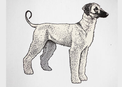 Afghane Junghund