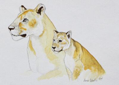 Löwen-Illustration