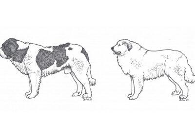 Herdenschutzhunde Pyrenäen