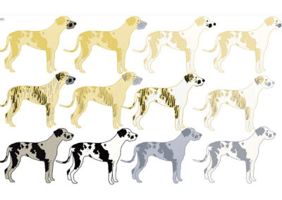 Doggen Varianten